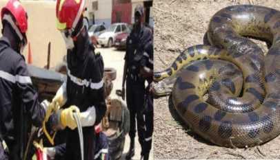 """Panique à Guédiawaye: Les secours confirme l'absence de """"serpent"""" ou de """"dragon"""""""